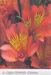 Ные цветы а летом они украшают клумбы