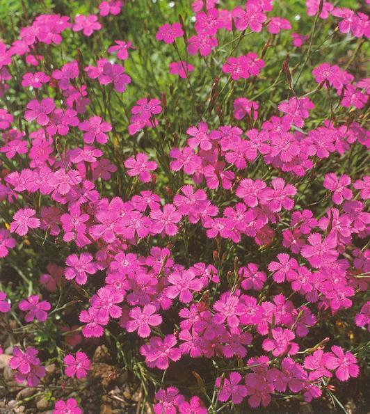 Flora green растения которые мы любим